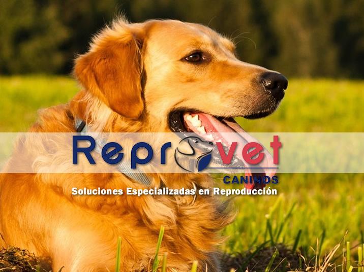 reprovet